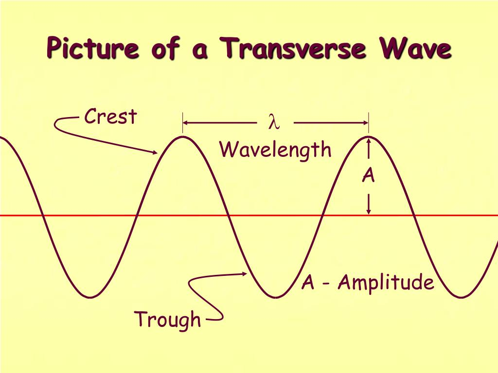 Picture of a Transverse Wave