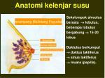 anatomi kelenjar susu1
