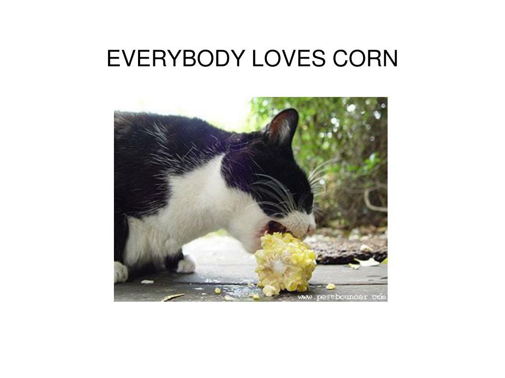 EVERYBODY LOVES CORN