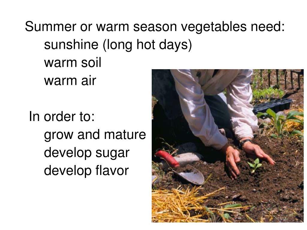 Summer or warm season vegetables need: