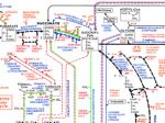 plant and animal biochemistry sometimes differ