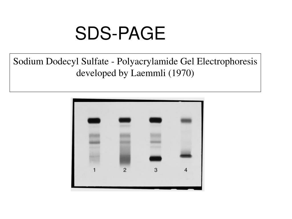 SDS-PAGE