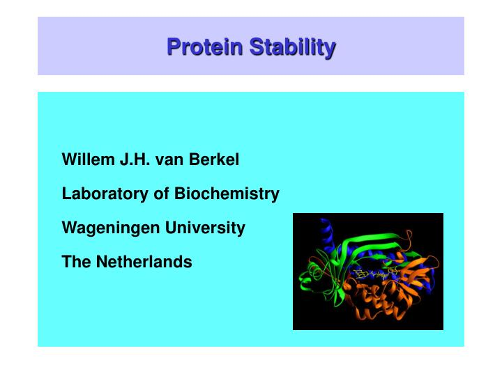 protein stability n.