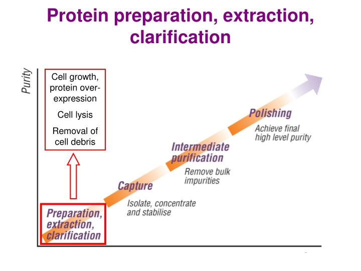 PPT - Methods of Protein Purification PowerPoint Presentation - ID:89332