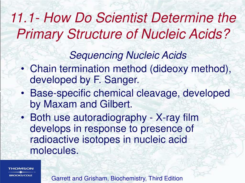 11.1- How Do Scientist Determine the Primary Structure of Nucleic Acids?