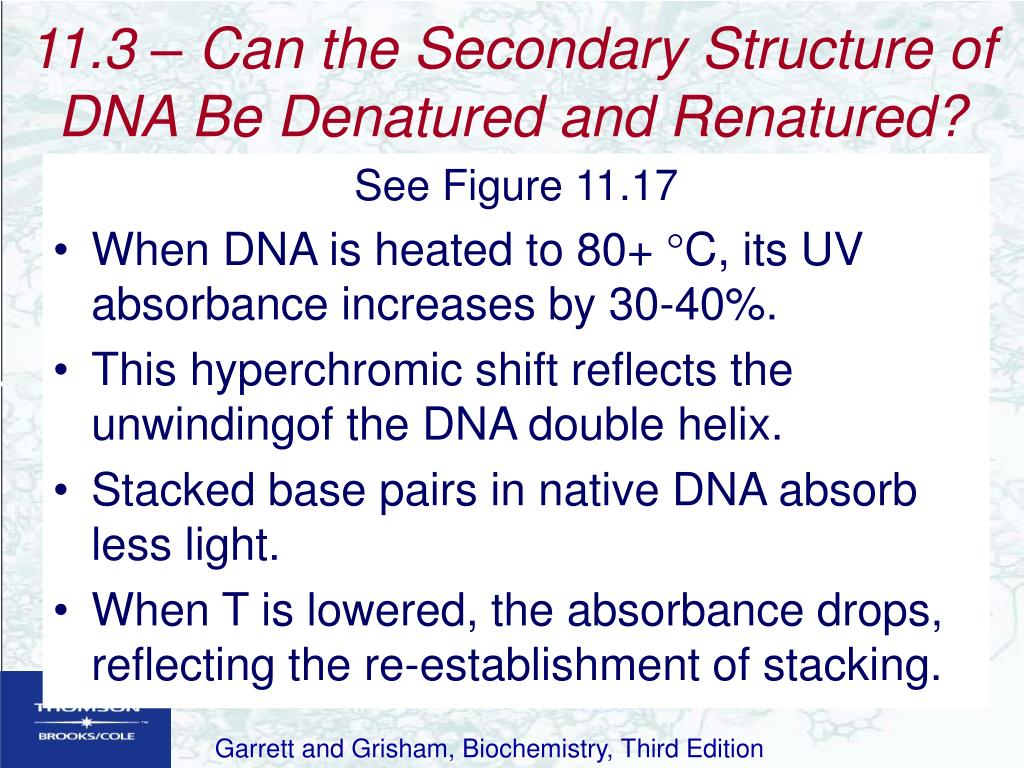 11.3 – Can the Secondary Structure of DNA Be Denatured and Renatured?