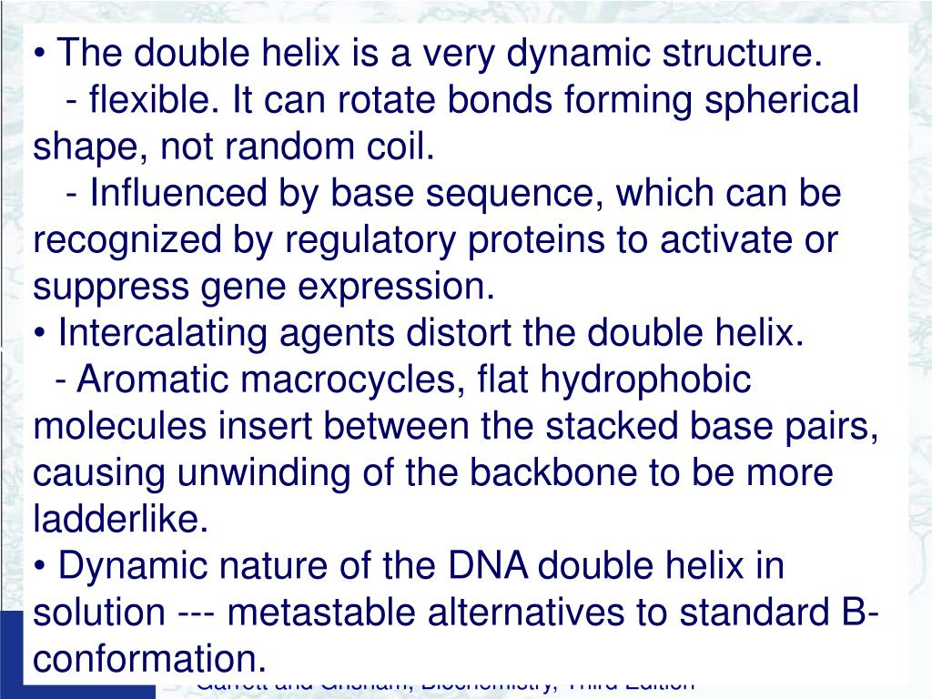 The double helix is a very dynamic structure.