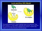 lock and key es model