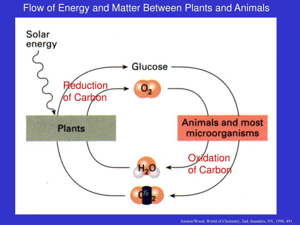 Flow of Energy and Matter Between Plants and Animals