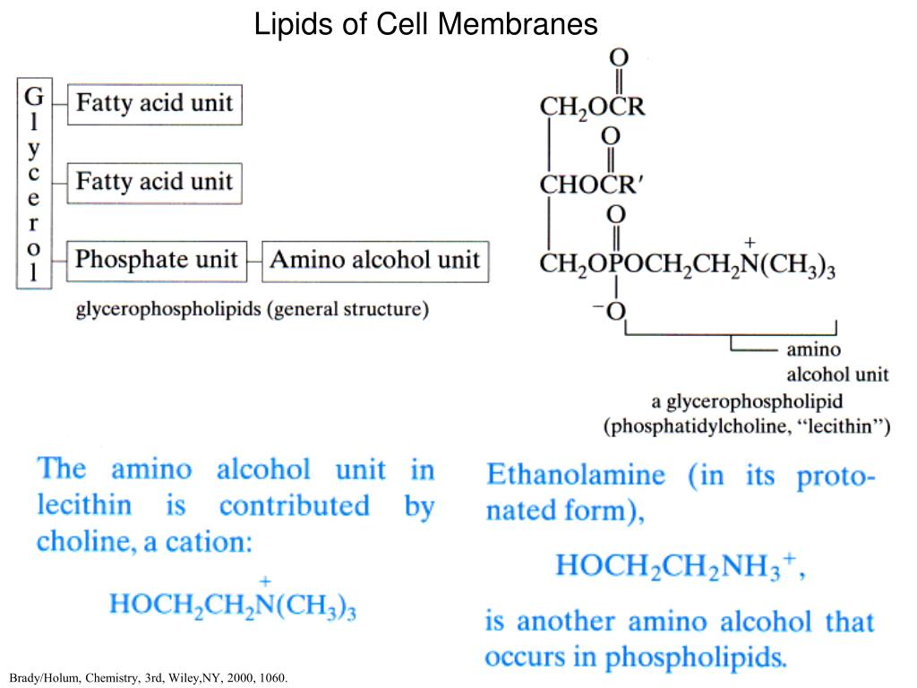 Lipids of Cell Membranes