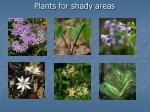 plants for shady areas
