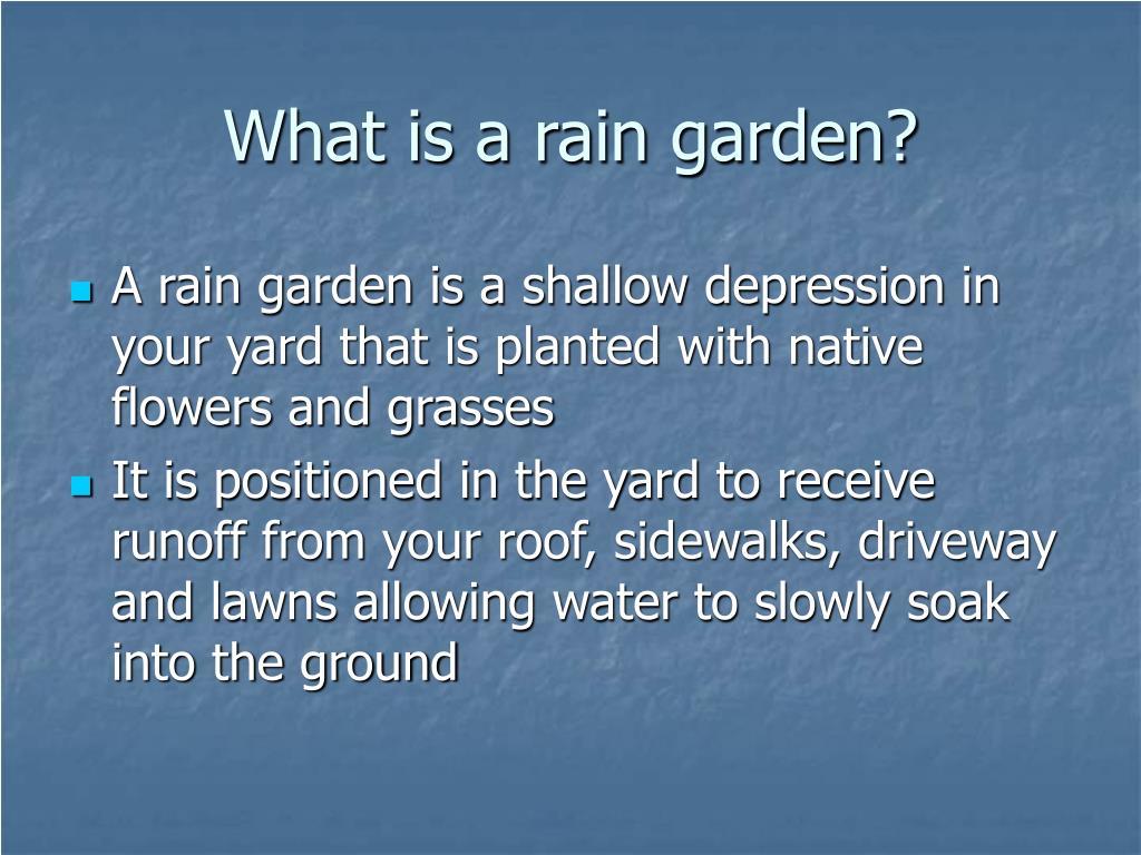 What is a rain garden?
