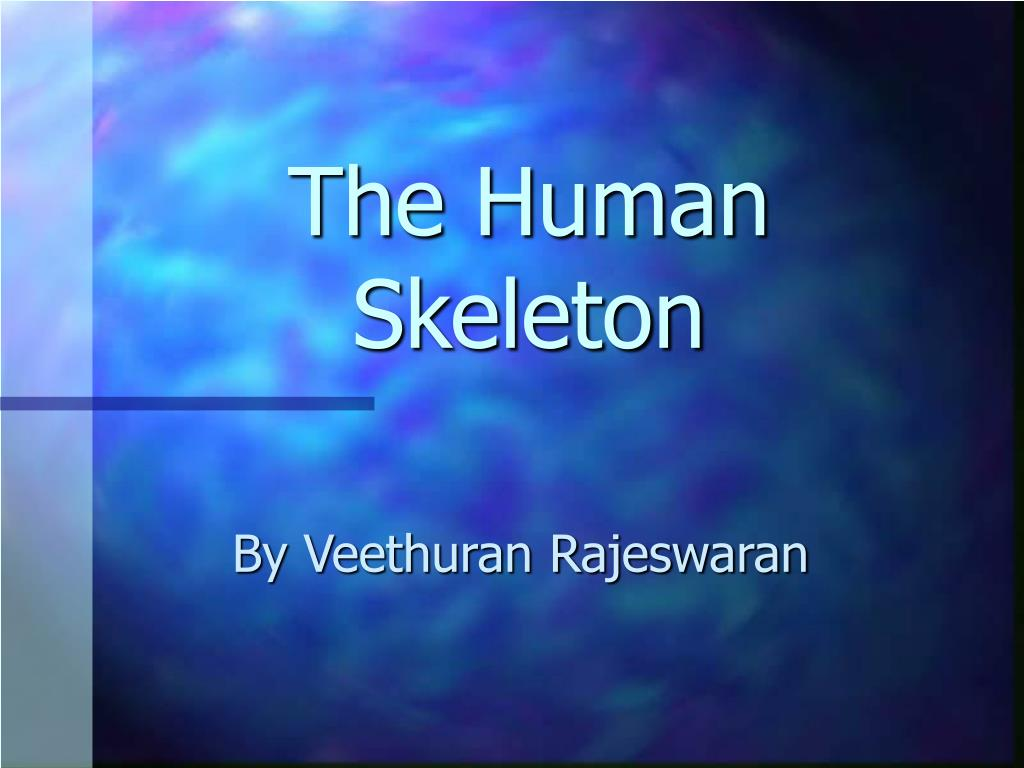 the human skeleton l.