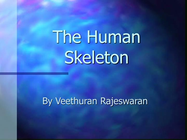 the human skeleton n.
