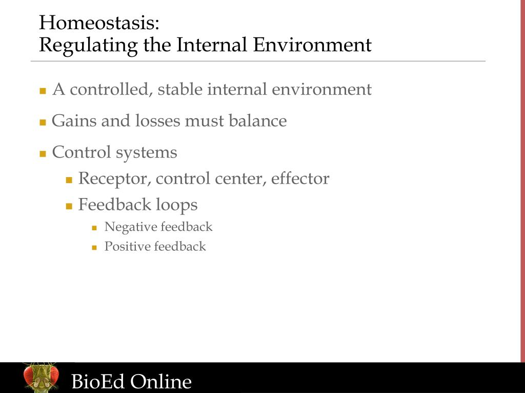 the regulation of internal environment by