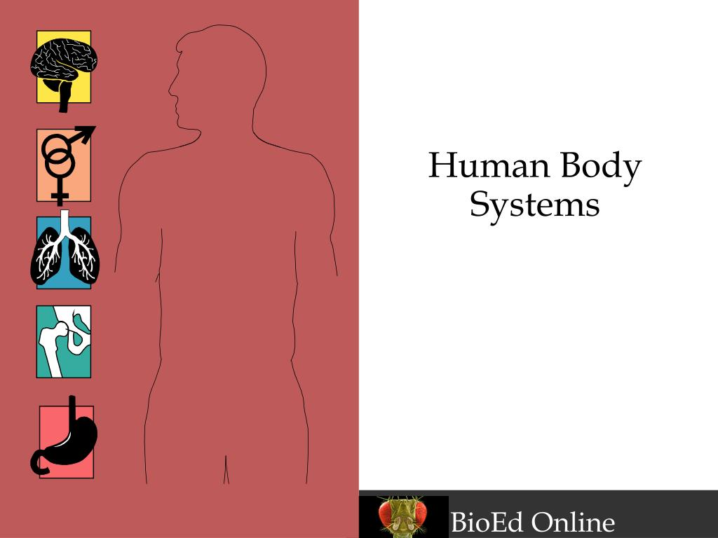 human body systems l.