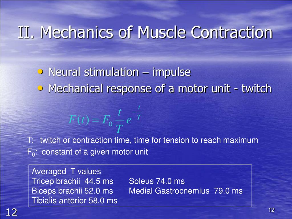 II. Mechanics of Muscle Contraction