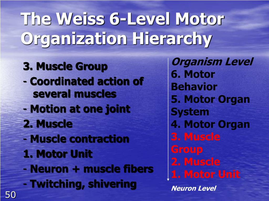 The Weiss 6-Level Motor Organization Hierarchy