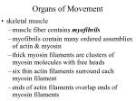 organs of movement13