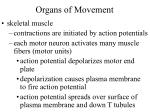 organs of movement20