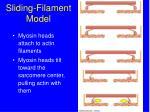 sliding filament model20