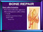 bone repair58
