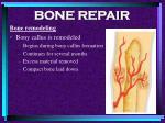 bone repair59