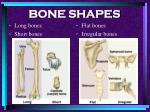 bone shapes