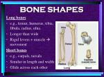 bone shapes10
