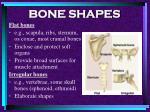 bone shapes11
