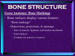 bone structure14