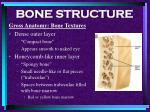 bone structure15