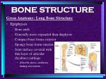 bone structure17