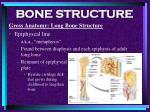 bone structure18