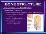 bone structure21