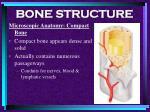 bone structure25