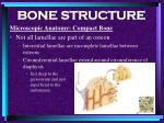bone structure28