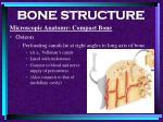 bone structure31