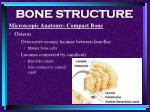 bone structure32