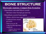 bone structure33