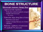 bone structure34