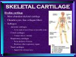 skeletal cartilage4