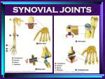 synovial joints94