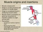 muscle origins and insertions