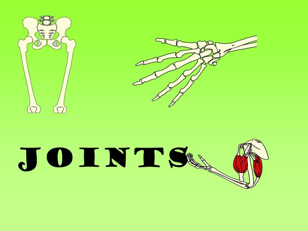 joints l.