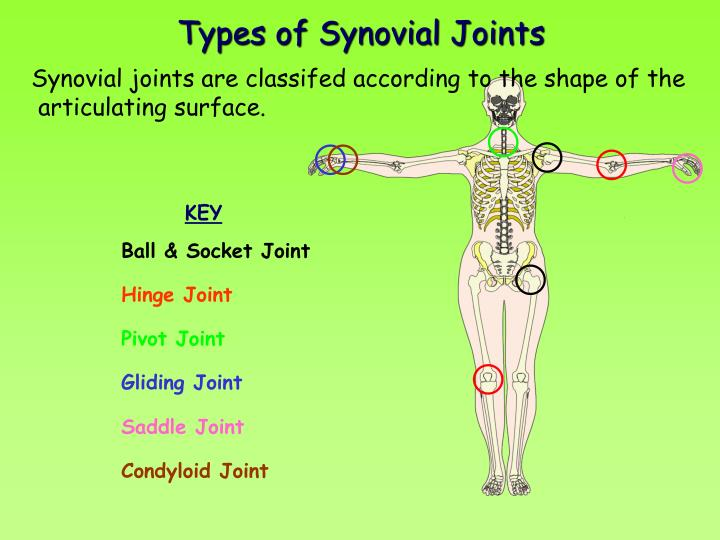 Ppt Joints Powerpoint Presentation Id89428