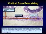 cortical bone remodeling59