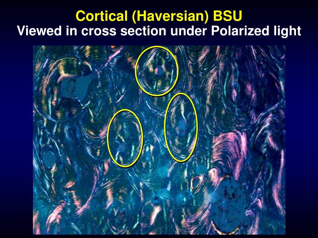 Cortical (Haversian) BSU