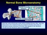 normal bone microanatomy9