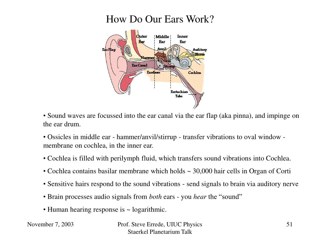 How Do Our Ears Work?